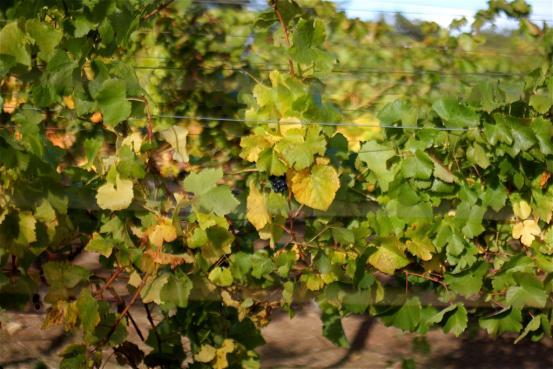 Best Wineries to Visit in Santa Cruz, California