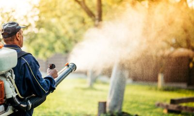 Survive the Florida Mosquito Season: 8 Home Mosquito Control Tips