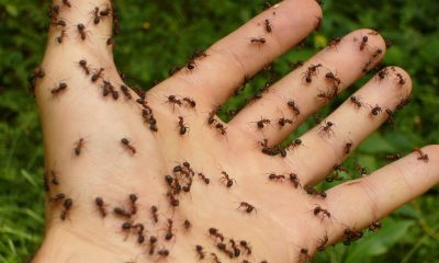 5 Smart Tips on How to Get Rid of Ants In and Around Your Home