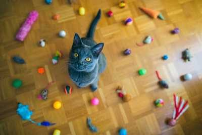 Best Toys For Your Pet Cat