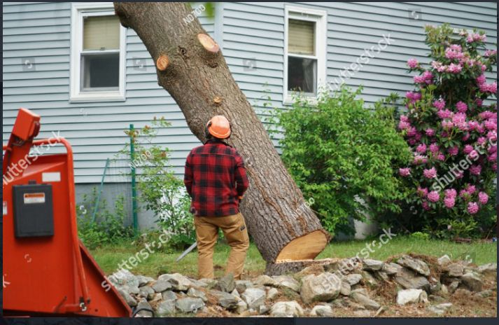 Improve the Aesthetic Appeal of Your Garden With Professional Tree Removal Improve Services