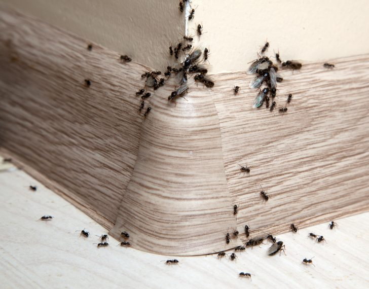Creepy Attic or Pest Infestation? 6 Common Signs of Pests in Your Roof