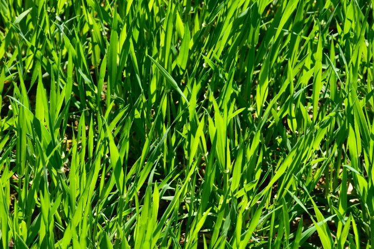 Luscious Looking Lawns: The Top Lawn Care Tips for Homeowners
