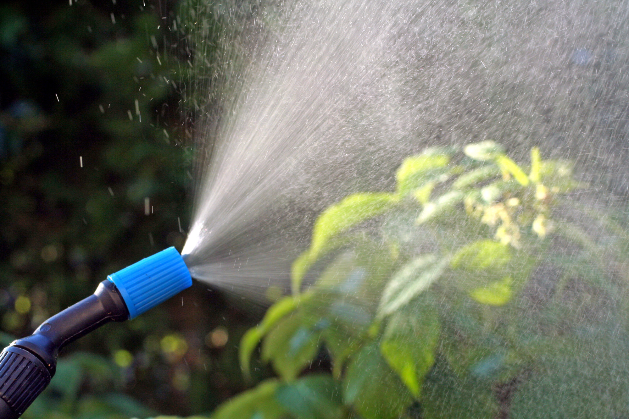 5 Ways to Keep Your Garden Free From Pests Without Using Harmful Pesticides