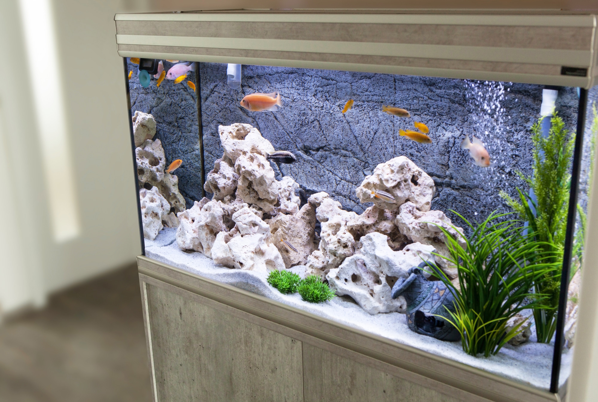 6 Beautiful Home Aquariums That Are Swimming In Style
