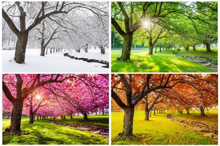 Adapting Your Garden For Different Seasons