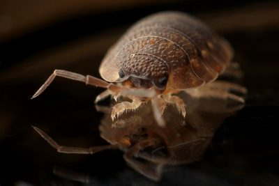 Bed Bugs Be Gone: Best Tips for Identifying and Getting Rid of Bed Bugs