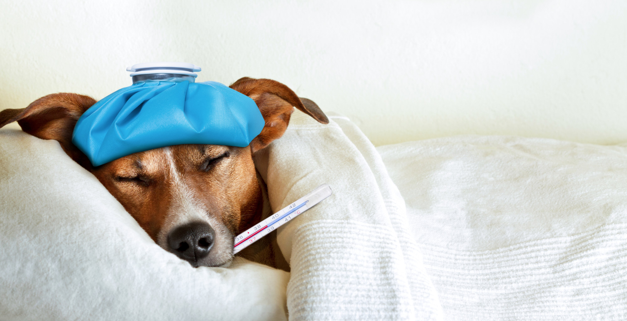 How to Manage Life with a Chronically Sick Animal