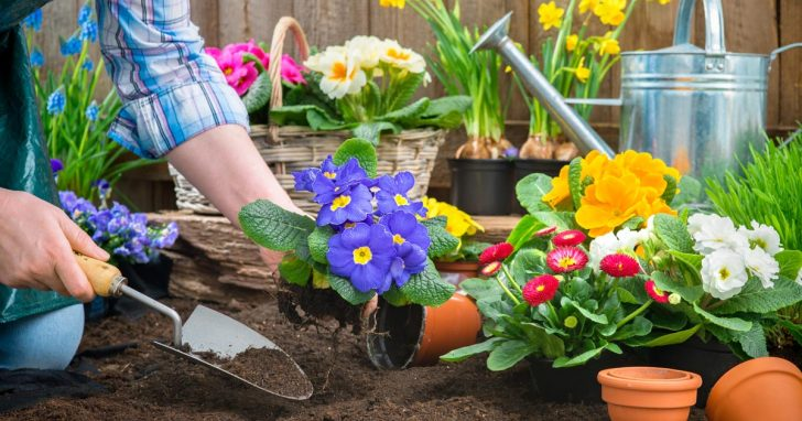 What To Consider When Re-imagining Your Garden