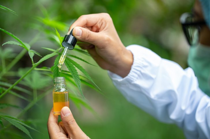 The Secret Behind the Scent and Flavor: Examining 6 Types of Terpenes in CBD