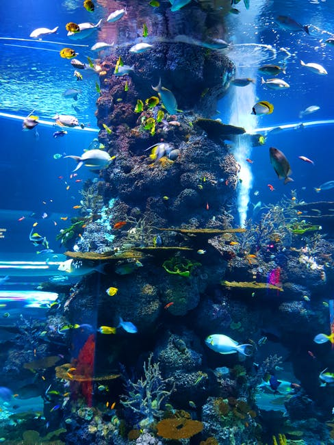 The Soothing Benefits of an Indoor Salt Water Fish Tank