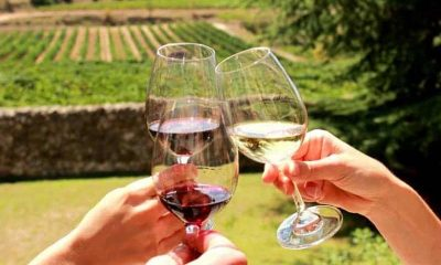 7 Tips for Planning the Perfect Wine Tour