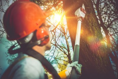All Natural Tree Experts Agree: Top 8 Signs It's Time to Remove a Tree