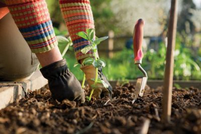 13 Top Gardening Tips for Beginners