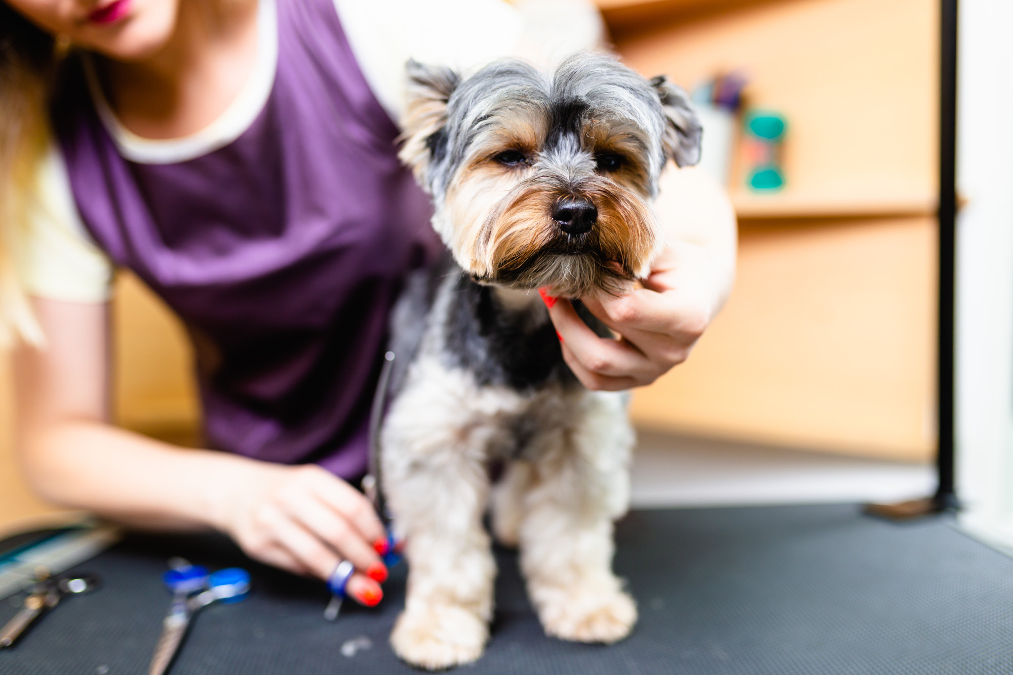 10 Amazing Dog Haircuts from Professional Dog Grooming Services