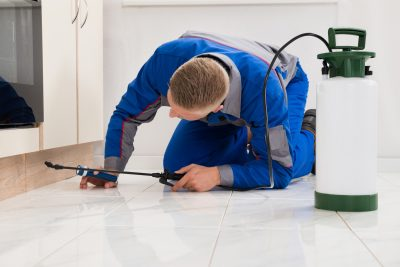 The Problems with Pests: Why Pest Control Is a Worthy Investment