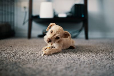 5 Reasons to Professionally Clean Your Carpets This Fall