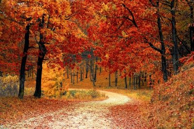Autumn Activities for Caregivers