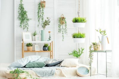 Avoid These 8 Mistakes to Master Indoor Plant Care