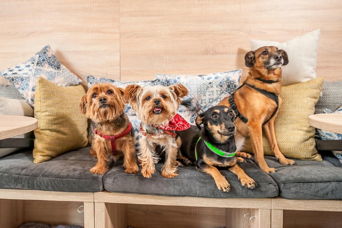 Dog friendly hotels in Santa Barbara
