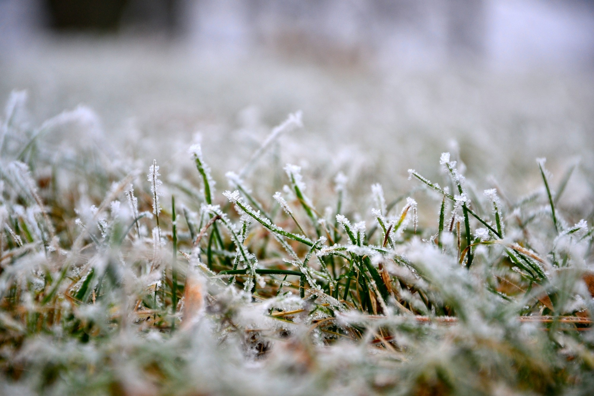 Winter Lawn Care Tips to Embrace This Season
