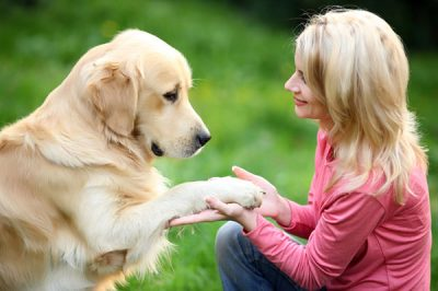 Why are dogs suitable for your health?