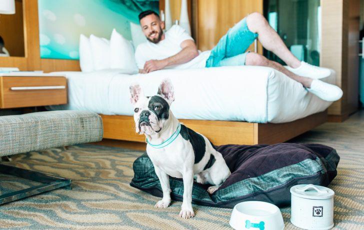 dog friendly hotels santa barbara
