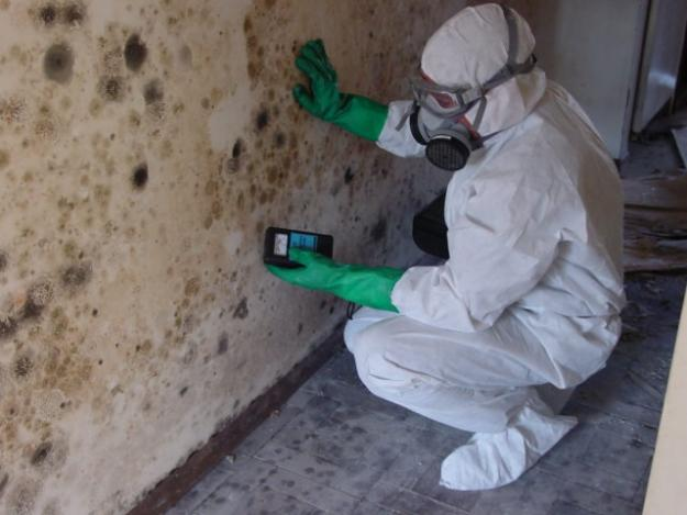 Top Advantages of Professional Mold Removal Process