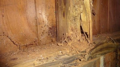 A Homeowner's Guide to Dealing with Termites