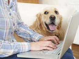 Pros and Cons of Petplan Pet Insurance