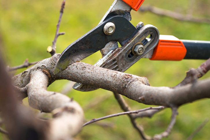 The Best Tips and Techniques for Trimming and Pruning Trees