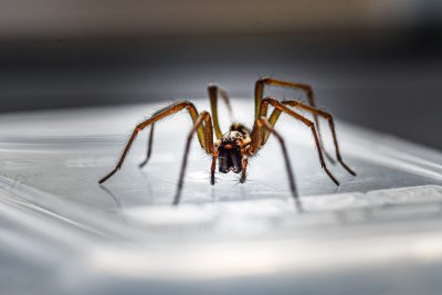 Good Spider or Bad Spider? Your Guide to Different Types of Spiders