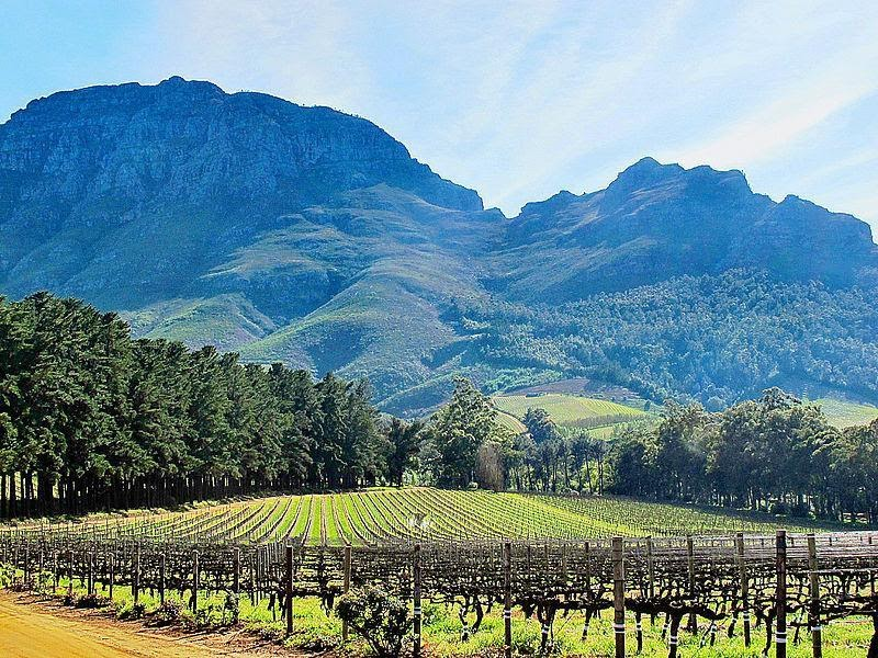 Exploring the Cape Winelands