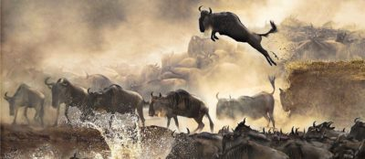 The Wildebeest Migration