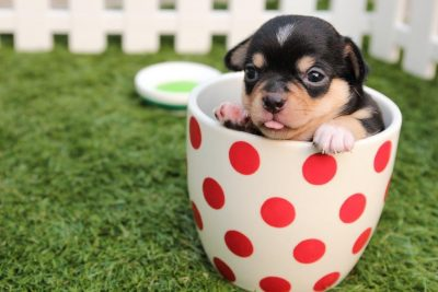 10 MUST HAVE SUPPLIES FOR YOUR DOG