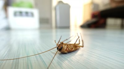 4 Most Common Household Bugs You Will Find as a New Homeowner