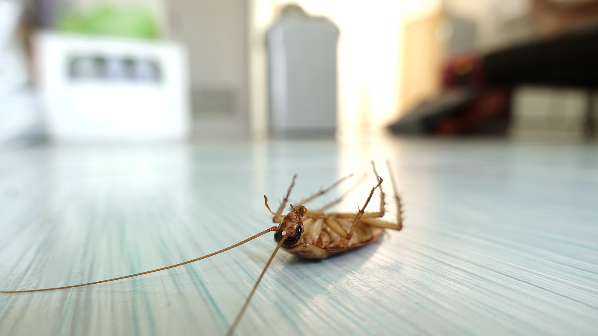 common household bugs