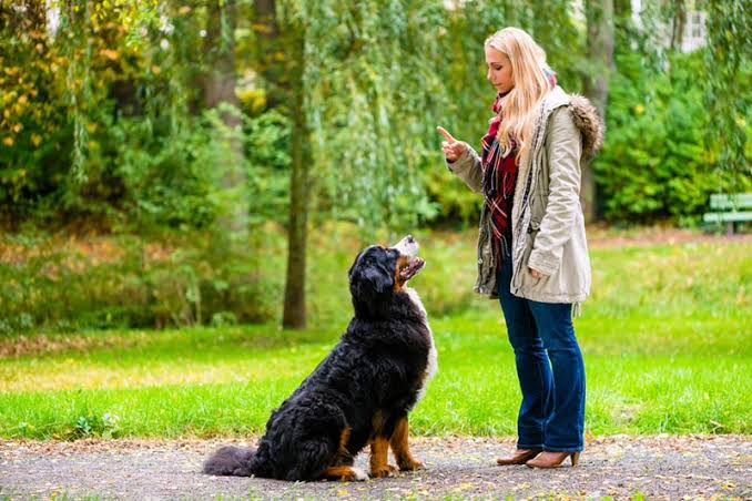 How to Socialize Your Older Dog? 5 Tips That Work