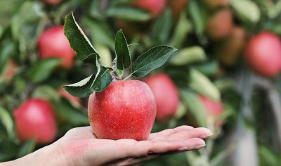 The Apple of Your Eye: How to Take Care of Your Fruit Trees