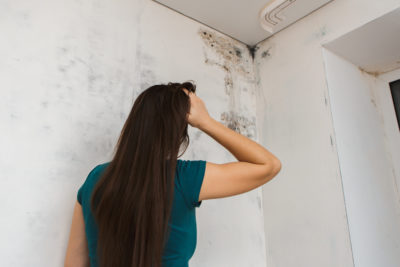 Which Type Of Mold Removal Process Is Appropriate For Your Home
