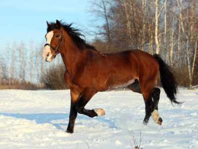 Horse During Winter Months