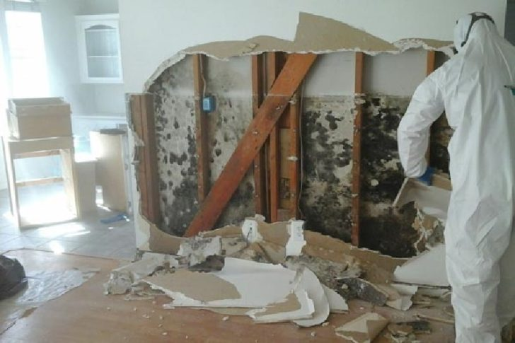 6 Factors to Consider When Finding a Mold Inspector