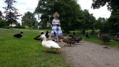 What to Feed Ducks – Everything You Need to Know