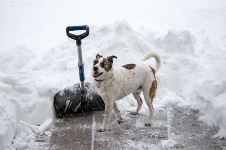 Top 4 Alternatives to Salt for Snow Removal