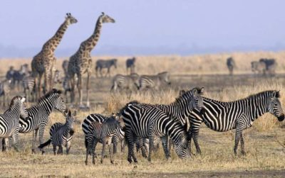 Things to know before you go on an African safari