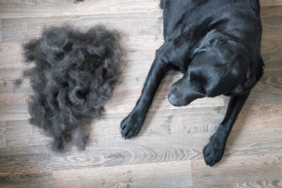 dog hair everywhere