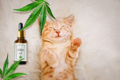 Benefits Of Feeding Your Pet CBD Oil Cat Treats