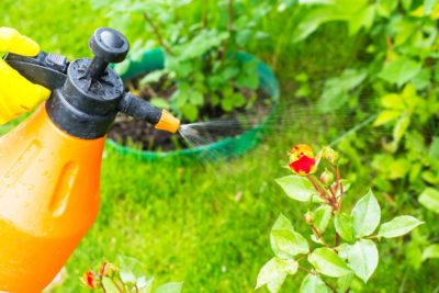 How to Keep Pests Out Of Your Home and Garden Naturally