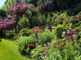 evergreen shrubs for garden