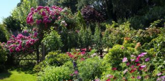 evergreen shrubs for garden